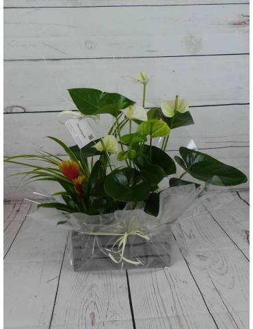Caja con plantas Minijardin