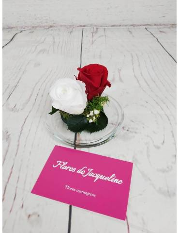 Mini Cúpula 2 Rosas Preservadas  - Diferentes Colores