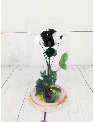 Rosa Preservada Negra En...