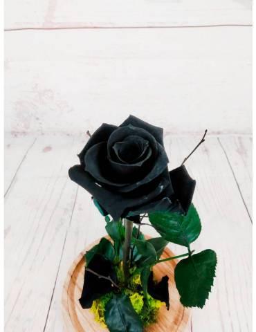 rosa liofilizada color negro