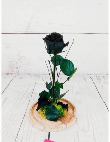 rosas preservadas de color negro