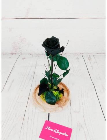 rosa liofilizada negra