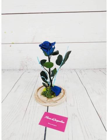 rosa preservada color azul