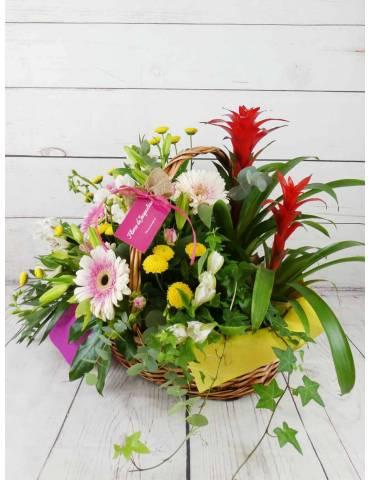 flores y plantas colores alegres