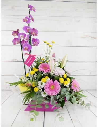 Flores y Plantas combinadas de color rosado