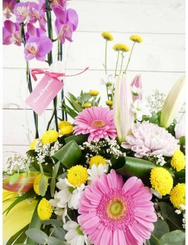 Flores y Plantas combinadas de color rosa