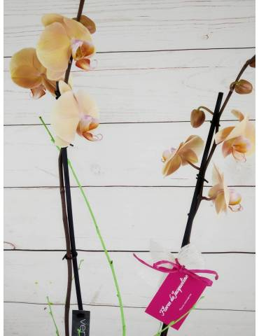 Orquídea 2 Tallos Salmón...