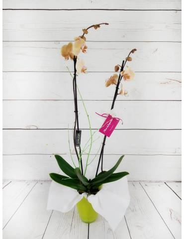 orquidea 2 tallos 70cm color salmon
