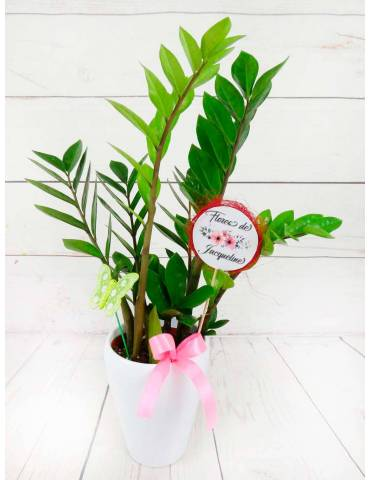 Planta Zamioculca 50cm altura ceramica blanca