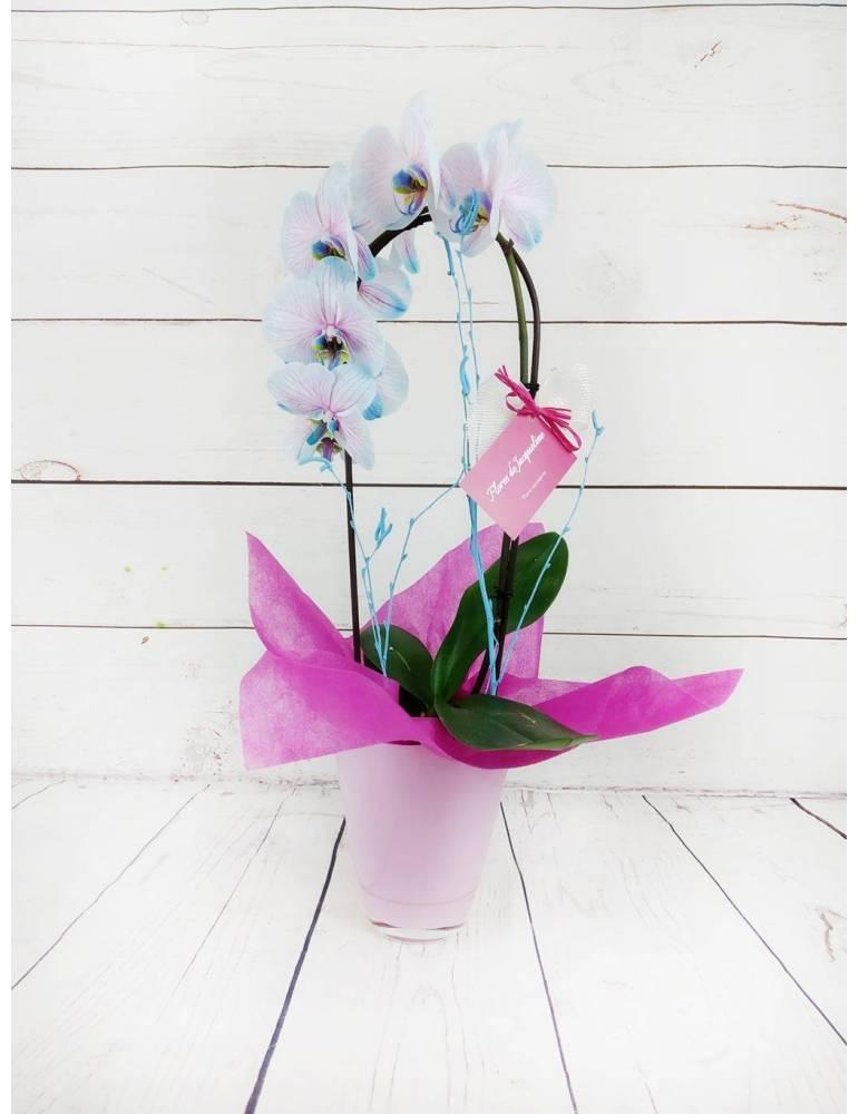 orquidea azul y rosa 60cm