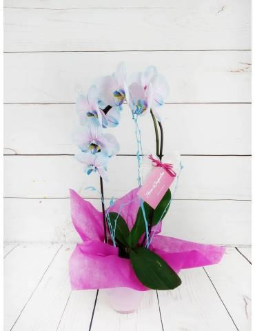 Orquídea  Azul y Rosa 45 cm...