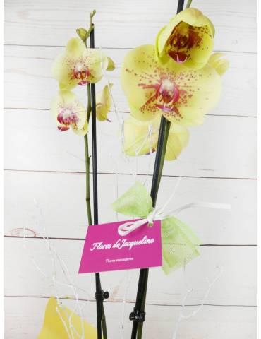 Orquídea 2 Tallos Amarilla 70cm