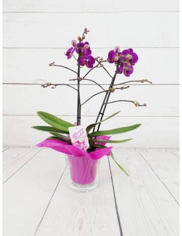 orquidea fucsia mini 40cm