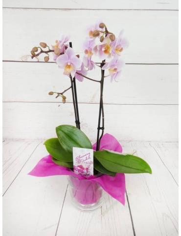 Orquídea Mini Rosada 2...