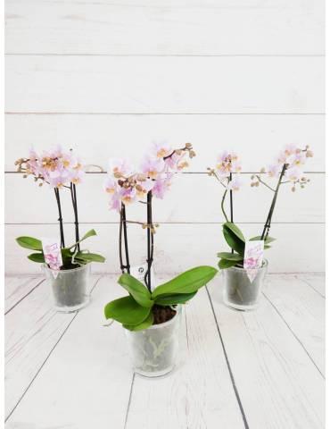 orquídea rosada 2 tallos 40cm