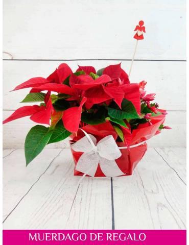 flor de pascua y cactus navideño