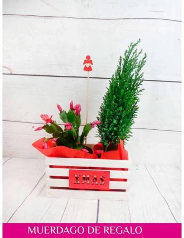 caja plantas de navidad
