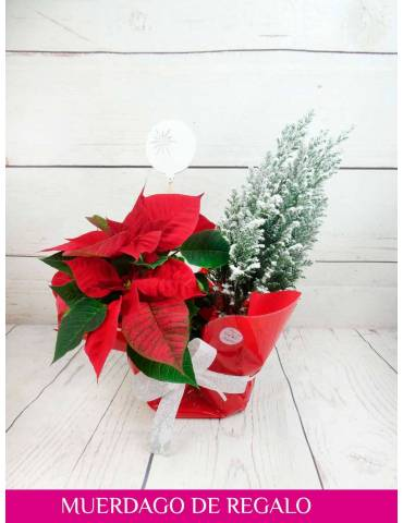 plantas de navidad para regalar