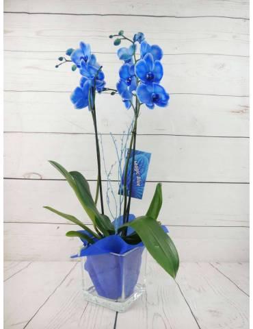 Orquídea 2 Tallos Azul 70cm...