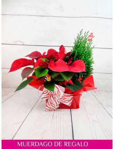plantas para regalar de navidad