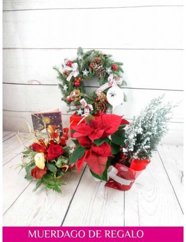 plantas y flores de navidad