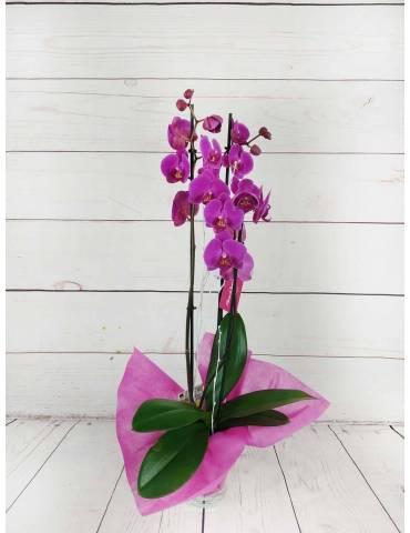 Orquídea 3 Tallos Fucsia 70cm
