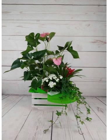 Caja Plantas Mini Jardin | Plantas de Interior