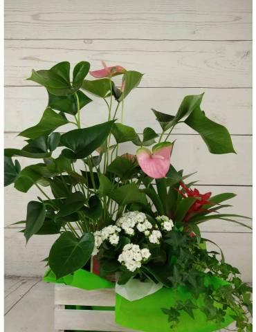 Caja Plantas Mini Jardin