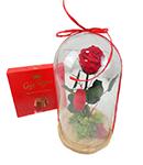 Comprar Rosas Liofilizadas | Flores Preservadas
