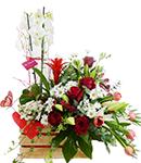 Plantas de Interior con Flores | Nueva Colección Florence