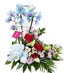 Flores para Nacimiento y Regalos para Bebes| Flores de Jacqueline