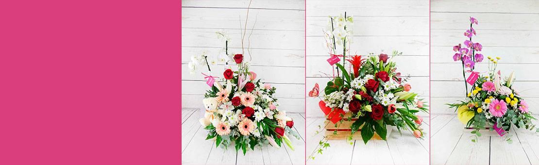 plantas de interior con flores frescas